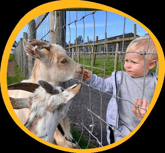 Boy feeding goats